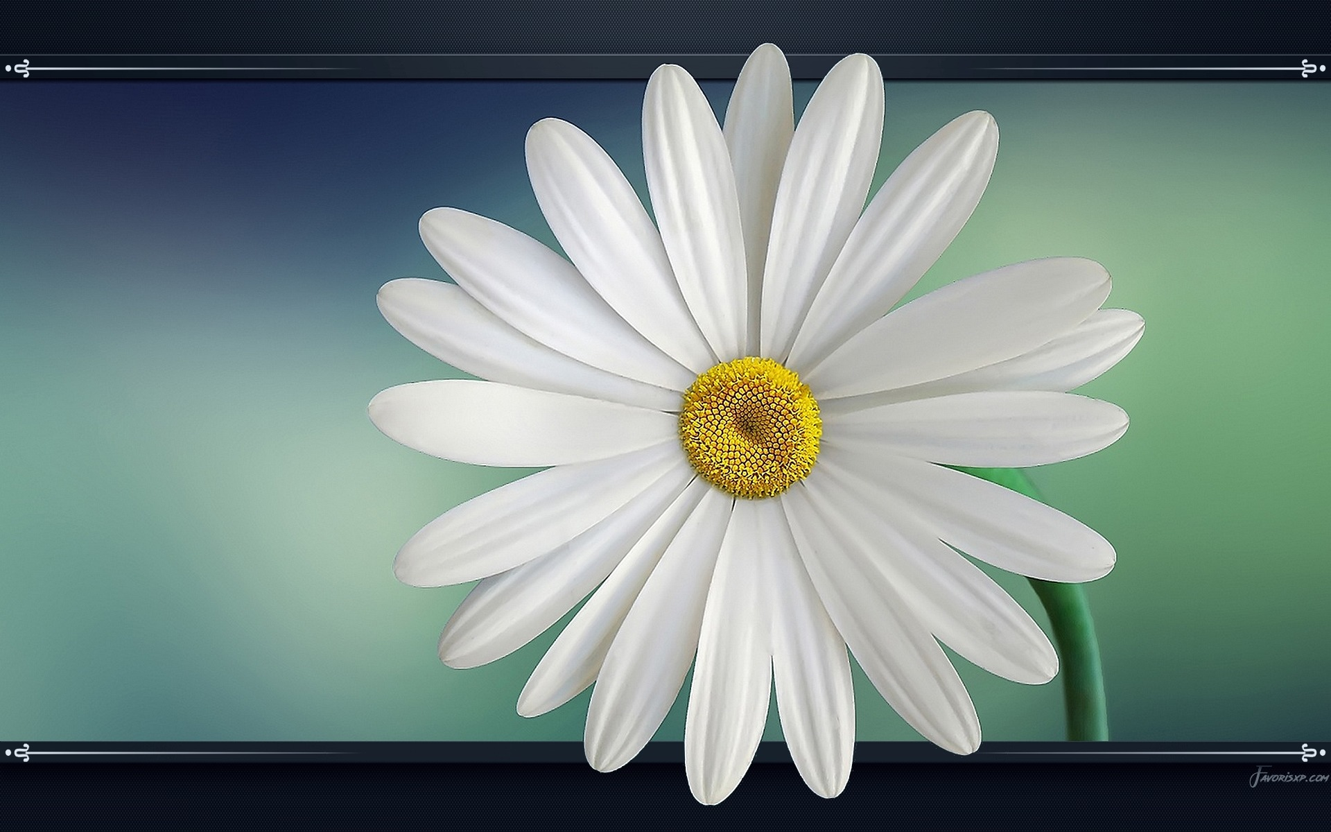 fleurs fonds d u0026 39  u00e9cran - image arri u00e8re-plan