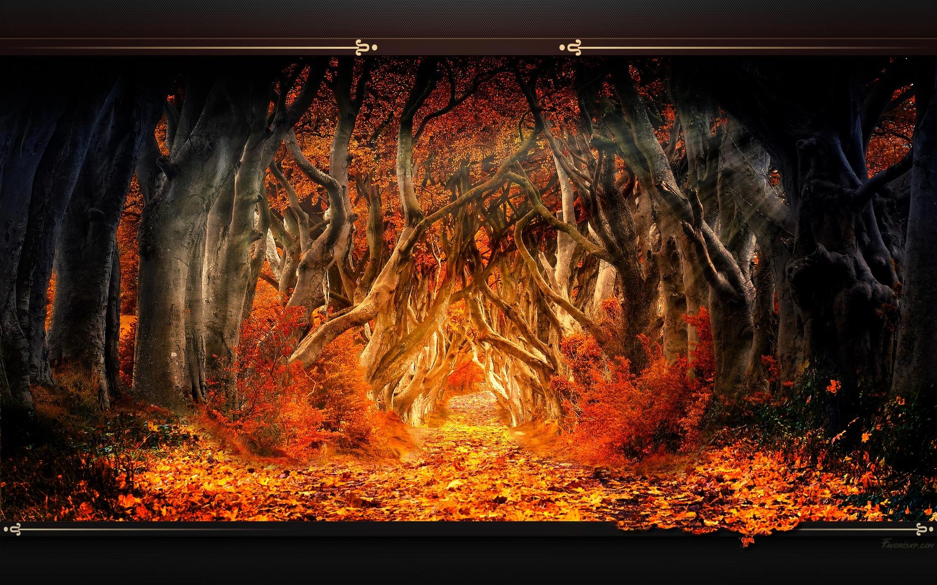 Paysage Fonds D Ecran Image Arriere Plan Wallpaper Favorisxp